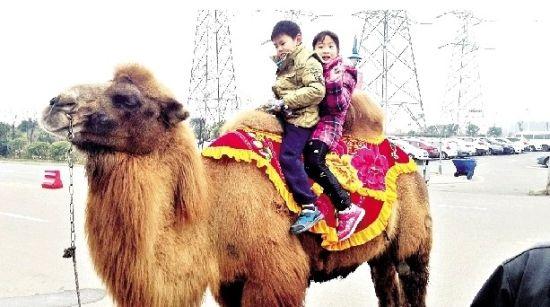 孩子与动物的天真合影