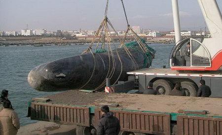 组图:47吨重巨鲸误闯山东养殖区死亡