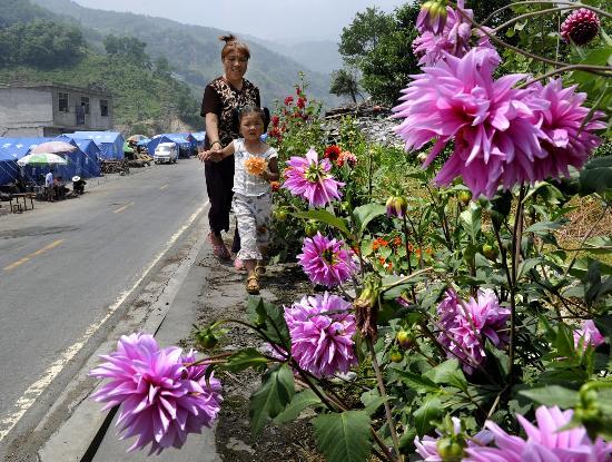 图文:漩口镇小麻湾村路边鲜花盛开
