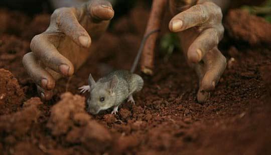 组图:田鼠成为非洲马拉维人美食