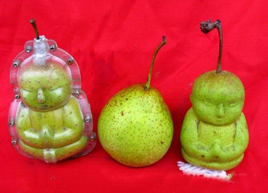月29日拍摄的套模的梨(左)与普通梨(中)。新华 ...