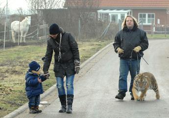 培恩带着幼虎上街散步。
