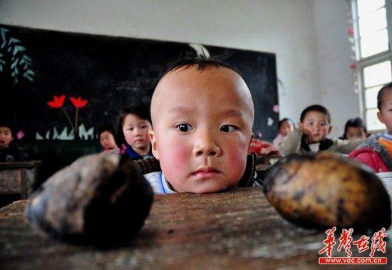 """新晃县洞坪乡大坪坡村小5岁的彭仪望着课桌上的红薯,这是他最""""丰盛""""的午餐。(记者:王立三摄)"""