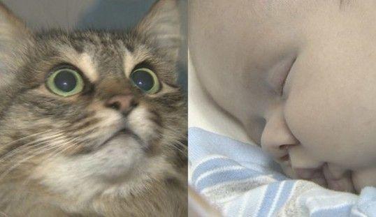 """克日俄罗斯一个小镇演出了温馨一幕:一只漂泊猫""""救""""了一位被抛弃的男婴。(图像来历:美国媒体)"""