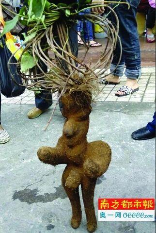 这株人形植物,手足俱全,五官齐备。南都记者周伟涵 摄