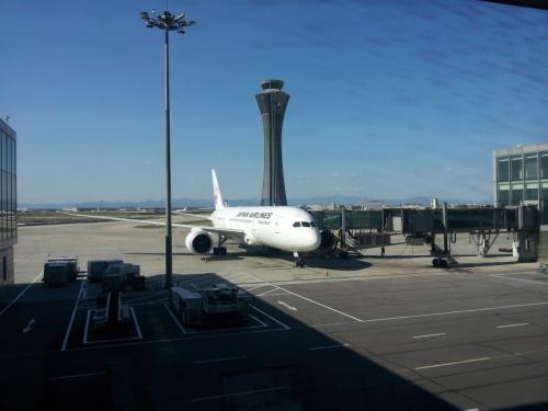 飞机在艳阳映衬下似乎也有了生命力