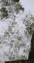 《有亭深竹里》190cmx96cm第一届花鸟画评委奖 2002年