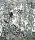 莫雄-2003藤-1 160x140cm