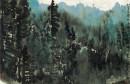 落基山区森林印象