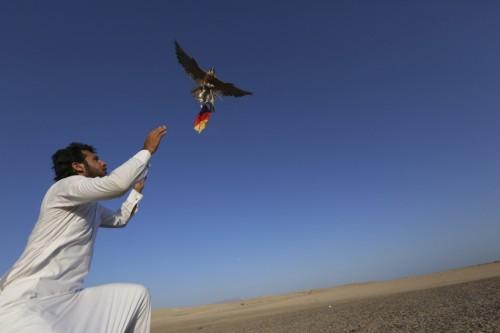 高清图-沙特球迷用老鹰预测决赛结果