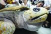 300岁海龟死前流泪