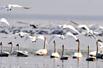 30万珍禽湖畔越冬