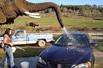 大象为游客洗车