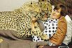 女子与猎豹同眠
