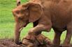 大象母亲救落难幼崽