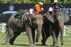 激战正酣为保护大象