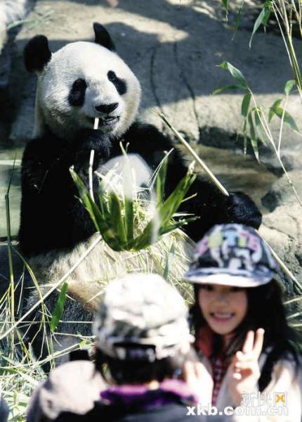 """动物园外排起长龙,市民争相前来""""围观""""大熊猫"""