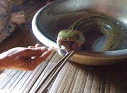 """越南一男子捕获""""怪鱼"""" 蛇头猪舌长相怪异(网页截图)"""