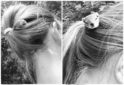 女孩接小松鼠回家后,对其无微不至 松鼠将女孩的马尾辫当成家 据报道,非洲津巴布韦女童普特里在父母开设的野生动物园办公室,发现一只10天大的松鼠重伤倒地,遂把它带回家照料。 小松鼠在康复后有个古怪癖好,最爱爬到普特里头上,躲在她梳起的马尾里。普特里两个月来一直让它寄居头上,只在睡觉和洗澡时暂时分开,非常有趣。