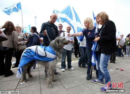 当地时间9月13日,苏格兰独立公投赞成和反对两个阵营,都各自在投票前最后一个周六举办了大型街头宣传活动争取支持。
