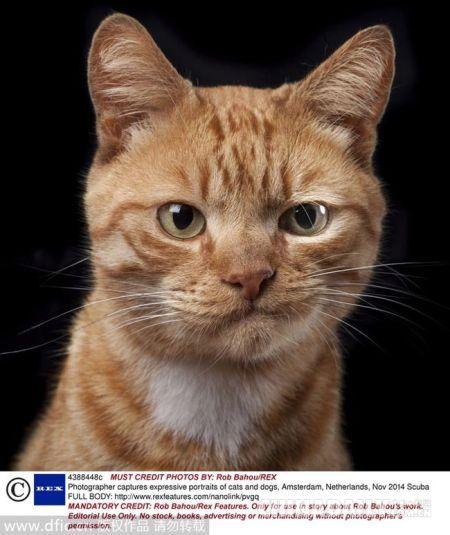 a人类猫狗睥睨人类摄影师抓拍表情表情[1]-中国日报网原生态奇葩包图片
