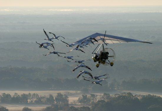 组图:科研人员用滑翔翼带领鸣鹤迁徙