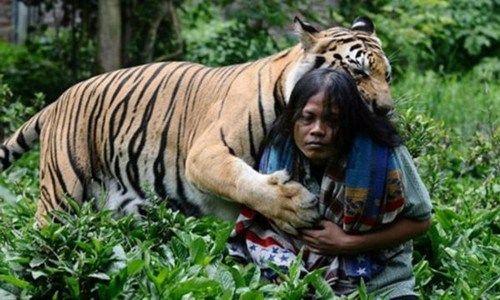 印尼男子养老虎当宠物