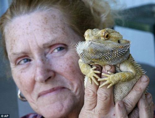蜥蜴落水险被淹死 女主人心肺复苏将其救活