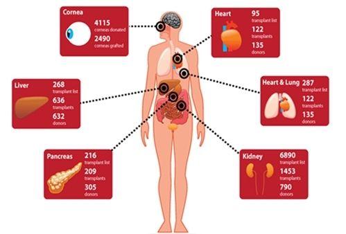 资料图:可用于移植的器官