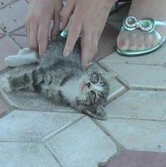 [转载]北大学生干部当众虐杀小猫 - 小草 -  高山流水