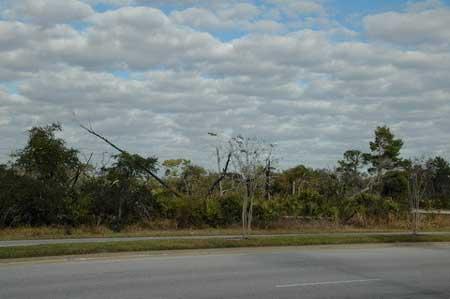 高速路边的林木