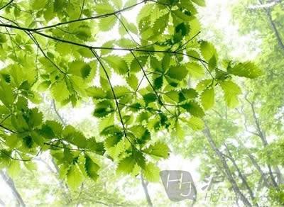 """时令热词:""""夏至日""""是""""狗日子""""?"""