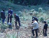 植树造林保护土壤