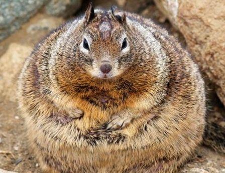 带宝宝围观世界上最胖的动物们(组图)