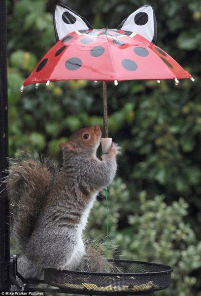 可爱松鼠打伞保持食物干燥