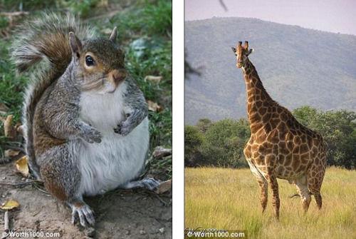 盘点动物园各种肥胖动物 看似可爱减肥难