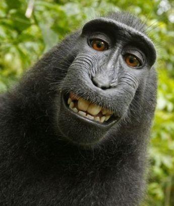 大猩猩玩转相机做鬼脸华丽自拍搞怪