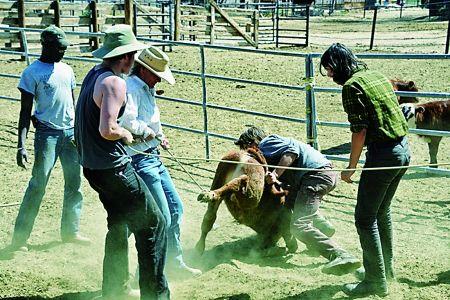 通过套牛锻炼团队精神