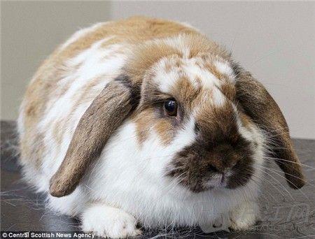 英国办肥胖宠物瘦身竞赛 动物减肥总动员