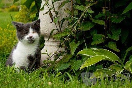双语:盲猫杰克带给我们的人生感悟