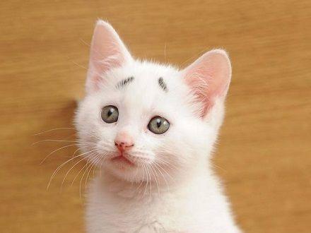 超萌手绘小猫图片