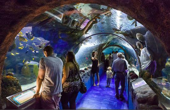 """位于明尼苏达州的""""美国购物中心""""也建有水上运动中心和海洋生物馆,内有黄貂鱼、海龟以及其他多种鱼类"""