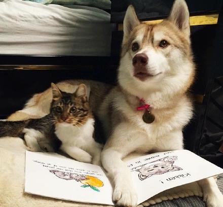 小猫Rosie:我是只小哈