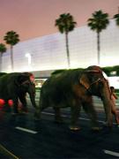 大象运抵现场