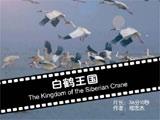 《白鹤王国》