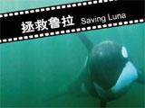 观众最喜爱的大熊猫金杯影片《拯救鲁拉》