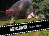 观众最喜爱的最佳摄影影片《超级鼹鼠》