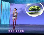 王菲演唱《传奇》