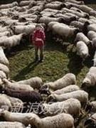 《黑羊》(意大利)