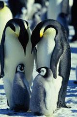 《帝企鹅日记》